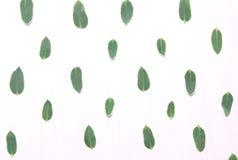 绿色叶子的样式 顶视图,平的看法 免版税图库摄影