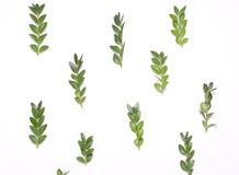 绿色叶子的样式 免版税库存照片