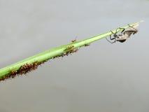 绿色叶子的甲虫用它的鸡蛋和婴孩 免版税库存照片