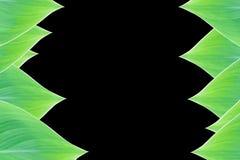 从绿色叶子的美好的自然边界框架 免版税库存照片