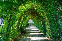 绿色叶子盖的走道 库存照片