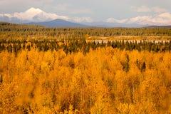 黄色叶子积土在山Denali Al下的Tanana河谷 免版税图库摄影