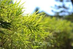 绿色叶子竹子在夏天庭院里  免版税库存图片