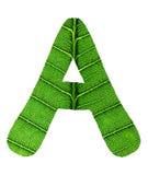绿色叶子纹理字母表 库存照片