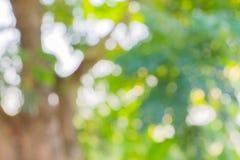 绿色叶子背景的迷离作用 免版税库存图片
