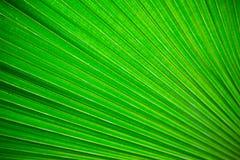 绿色叶子背景 库存图片