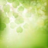 绿色叶子背景 10 eps 免版税图库摄影