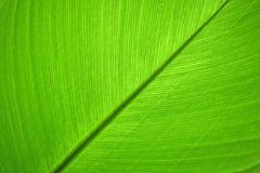 绿色叶子自然背景特写镜头摘要  图库摄影