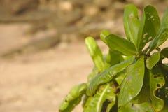 绿色叶子虫 免版税库存照片