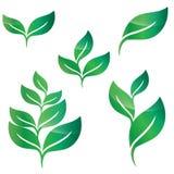 绿色叶子设计元素 免版税库存照片