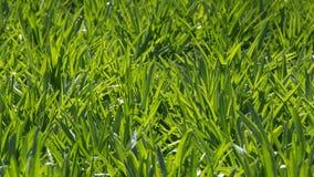 绿色叶子详细的背景 图库摄影