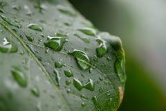 绿色叶子雨珠 库存图片