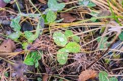 绿色叶子雨珠 免版税库存图片