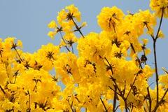 黄色叶子,印地安花 库存照片