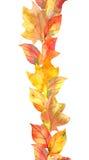 黄色叶子,莓果 重复秋天框架 水彩小条 免版税图库摄影