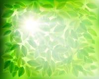 绿色叶子 也corel凹道例证向量 皇族释放例证