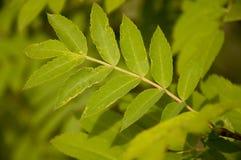 绿色叶子 夏天Forrest 免版税图库摄影