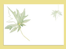 绿色叶子水彩传染媒介例证 免版税图库摄影