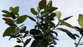 绿色叶子结构树 免版税库存图片