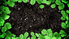 绿色叶子画框在地面土壤的在无缝的圈的停止运动样式 库存例证