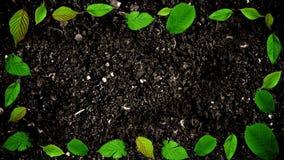 绿色叶子画框在地面土壤的在无缝的圈的停止运动样式 皇族释放例证