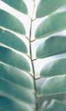 绿色叶子 自然 免版税图库摄影