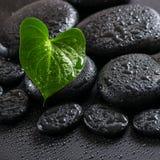 绿色叶子水芋百合和蜡烛美丽的温泉静物画  免版税库存图片