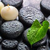 绿色叶子水芋百合的温泉在禅宗玄武岩s的概念和蜡烛 免版税库存图片