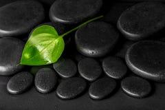 绿色叶子水芋百合的温泉概念在黑禅宗石头的与de 库存照片