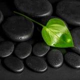 绿色叶子水芋百合的温泉概念在黑禅宗石头的与de 免版税库存图片