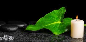 绿色叶子水芋百合的美好的温泉概念与露水,禅宗sto的 免版税库存照片
