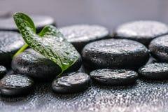 绿色叶子水芋百合的美好的温泉概念在禅宗玄武岩sto的 免版税库存照片