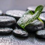 绿色叶子水芋百合的美好的温泉概念在禅宗玄武岩sto的 免版税库存图片