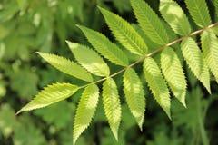 年轻绿色叶子 库存照片