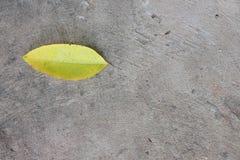 黄色叶子 免版税库存图片