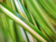绿色叶子 免版税库存图片