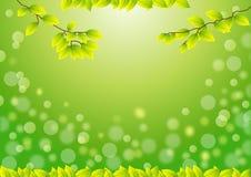 绿色叶子 库存例证
