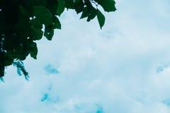 绿色叶子ob蓝天 库存照片