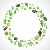 绿色叶茂盛 免版税库存图片