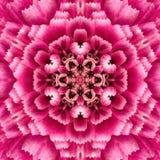 紫色同心花中心坛场万花筒设计 免版税库存照片