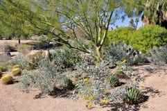 绿色吠声结构树 免版税库存图片