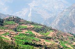 绿色和五颜六色的米领域大阳台,尼泊尔 免版税库存照片