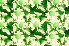 绿色和奶油花卉样式 免版税图库摄影
