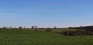 绿色和宜人的土地 库存照片