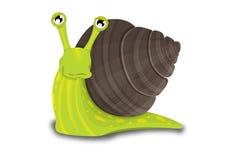 绿色和布朗蜗牛 图库摄影