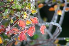 黄色和桃红色叶子 免版税库存图片