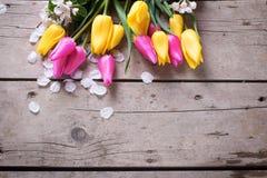 从黄色和桃红色春天郁金香和苹果树的边界开花 库存图片