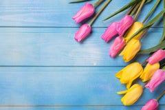 从黄色和桃红色郁金香的框架在蓝色木backg开花 免版税库存照片