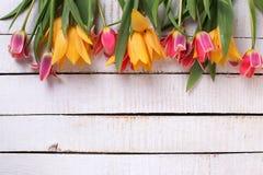 从黄色和桃红色郁金香花的边界 免版税库存照片