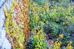 绿色和桔子在墙壁,背景,葡萄酒图象离开 免版税库存图片